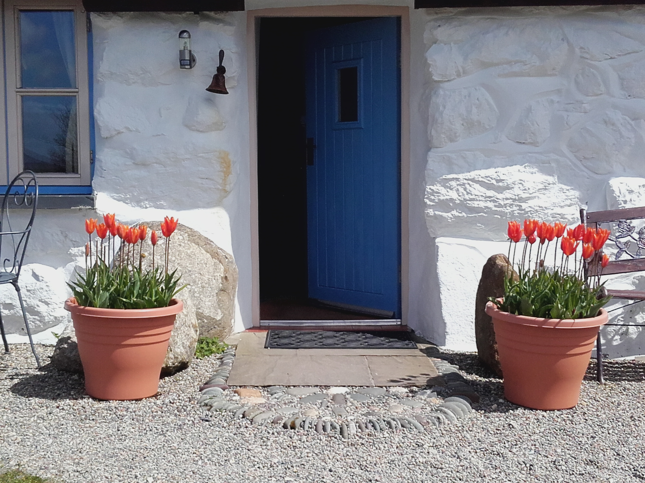 Tulips-Garreg-Gron-April-16-003